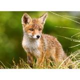 puzzle-260-little-fox-on-the-meadow-2.jpg