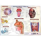 Anatomia omului - plansa nr.1, editura Carta Atlas