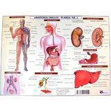 Anatomia omului - plansa nr.2, editura Carta Atlas