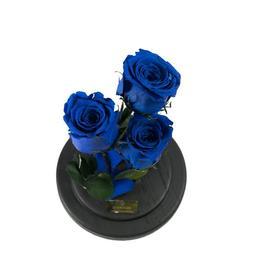 Aranjament 3 Trandafiri Criogenati Bleumarin Queen Roses in cupola de sticla