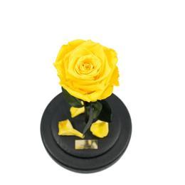 Trandafir Criogenat Galben Queen Roses in cupola de sticla