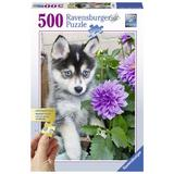Puzzle catel husky, 500 piese - Ravensburger