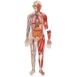 Set magnetic educativ pentru copii Learning Resources - Macheta corpului uman - sistemul osos si muscular