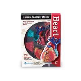 Corpul uman - Inima - Macheta cu 29 piese - Set educativ Learning Resources
