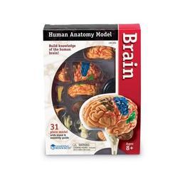 Corpul uman - Creierul - 31 piese - Set educativ Learning Resources