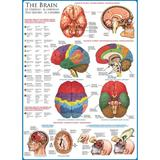 Puzzle 1000 piese The Brain