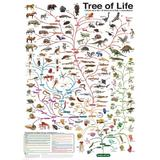 Puzzle 1000 piese The Tree of Life