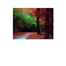Tablou Canvas Modern, Dimensiunea 80x50 ART283