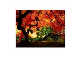 Tablou Canvas Modern, Dimensiunea 120x80 ART94