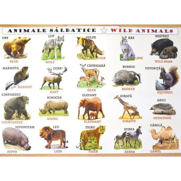 Animale Animale Marine