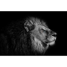 Tablou Canvas cu Animale 940 - 20 x 30 cm