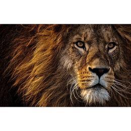 Tablou Canvas cu Animale 884 - 20 x 30 cm