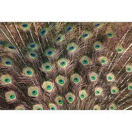 Tablou Canvas cu Animale 788 - 60 x 90 cm