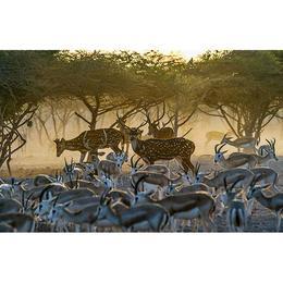 Tablou Canvas cu Animale 774 - 60 x 90 cm