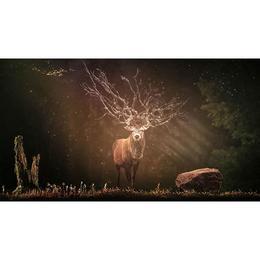 Tablou Canvas cu Animale 954 - 40 x 70 cm