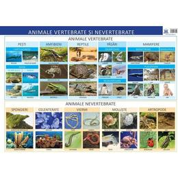 Plansa Animale vertebrate si nevertebrate - Florica Alexandrescu, editura Didactica Publishing House