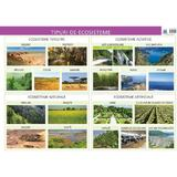 Plansa tipuri de ecosisteme - Florica Alexandrescu, editura Didactica Publishing House