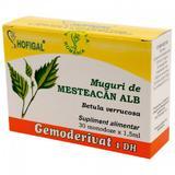 Gemoderivat Mesteacan Alb Hofigal, 30 monodoze