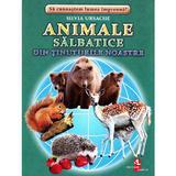 Animale salbatice din tinuturile noastre - Cartonase - Silvia Ursache, editura Silvius Libris