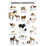 Plansa - Animale domestice, editura Didactica Publishing House