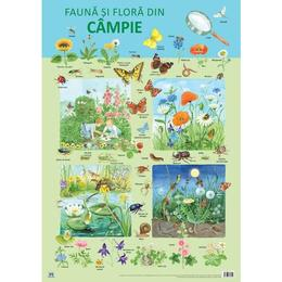Plansa: Fauna si flora din campie, editura Didactica Publishing House