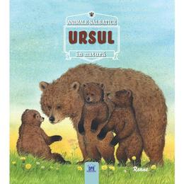 Animale salbatice in natura - Ursul, editura Didactica Publishing House