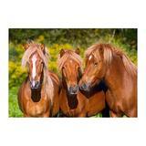 Puzzle Castorland 1000 Horse Friends