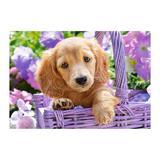 Puzzle Castorland 1000 Puppy in Basket