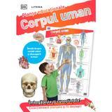 Corpul uman. Planse educationale, editura Litera