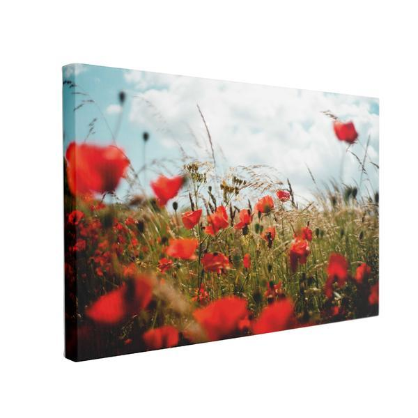Tablou Canvas Maci in Lanul de Grau, 50 x 70 cm, 100% Poliester