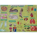 Plansa Biologie scolara - Zoologie, editura Carta Atlas