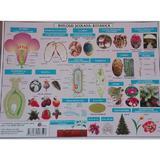 Plansa Biologie scolara - Botanica, editura Carta Atlas
