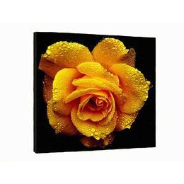 Tablou Canvas decorativ floare trandafir 50x50 cm decoratiuni interioare - Piksel
