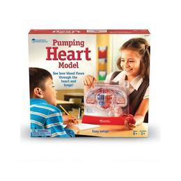 Set educativ copii - Cum functioneaza inima - Learning Resources